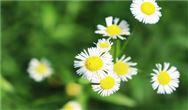聚焦揚塵+臭氧 云南啟動春夏大氣治污行動